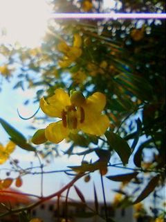 image/kobayou-2005-10-14T11:17:47-1.jpg